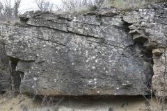 Dunes-2D tangential cross bedding (Jurassic, Burgundy)